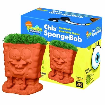 Chia Sponge Bob