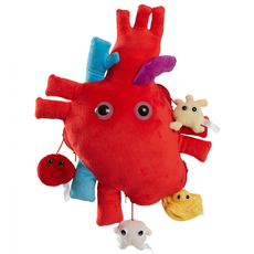 XL Heart (Heart Organ) XL Size With Minis