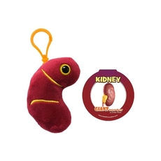 Kidney key chain
