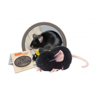Black Lab Mouse
