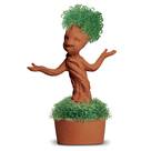 Chia Groot Potted