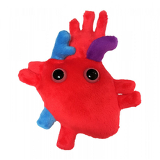 Heart (Heart Organ)